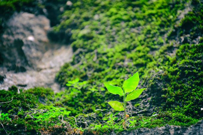 nueva gama bio servilletas y manteles biodegradables y compostables airlaid la pajarita mapelor