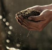 servilletas-biodegradables-airlaid-bio-compostables-la-pajarita