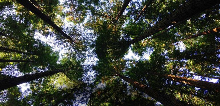 sostenibilidad-y-medio-ambiente-la-pajarita-mapelor